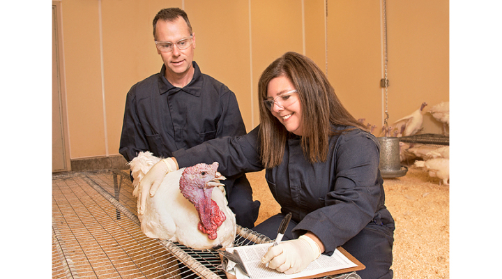 Salmonella vaccine reduces animal disease