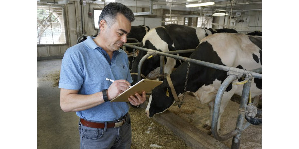 "Victor Cabrera, associate professor in the UW-Madison Department of Dairy Science, is heading up a multidisciplinary team of UW scientists that aims to create a ""virtual dairy farm brain"" that will help farmers make better management decisions. (Photo by Ted Halbach/UW-Madison Department of Dairy Science)"