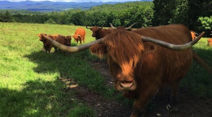 Vermont Open Farm Week Aug. 14-20