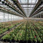 Greenhouse and nursery growers as well as professional landscapers can participate in five events throughout Michigan in September, October and December 2017, with conference, tour and workshop topics varying widely to appeal to all growers. (Heidi Lindberg, MSU Extension)