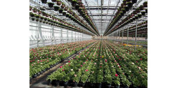 Greenhouse And Nursery Growers As Well Professional Landscapers Can Pare In Five Events Throughout Michigan
