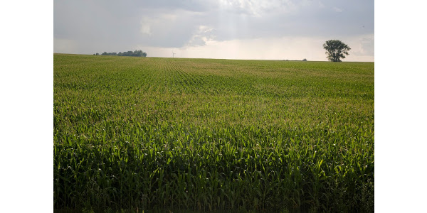Research by the University of Minnesota evaluated nitrogen application timing and its effect on different soil types across Minnesota to evaluate differences in economic optimum N rate and see whether split applications were beneficial at certain times throughout the season.(Courtesy of University of Minnesota Extension)
