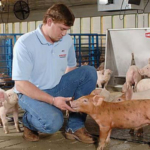 New executive director named for Iowa Farm Animal Care Initiative