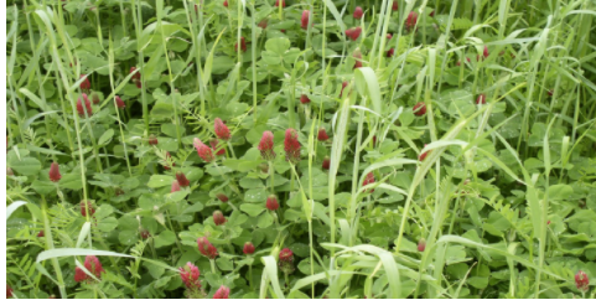 The North Carolina Conservation Districts are hosting spring and fall Soil Health Field Days to demonstrate the importance of cover crops. ( Courtesy of NC Stanly Soil and Water Conservation District)
