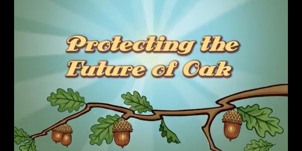 Video to help landowners preserve oak trees