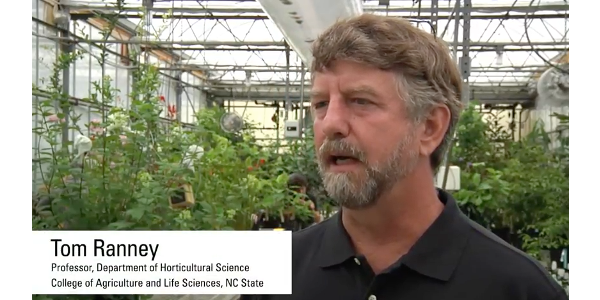 Ranney is the J.C. Raulston Distinguished Professor in NC State University's Department of Horticultural Science. (Screenshot from video)