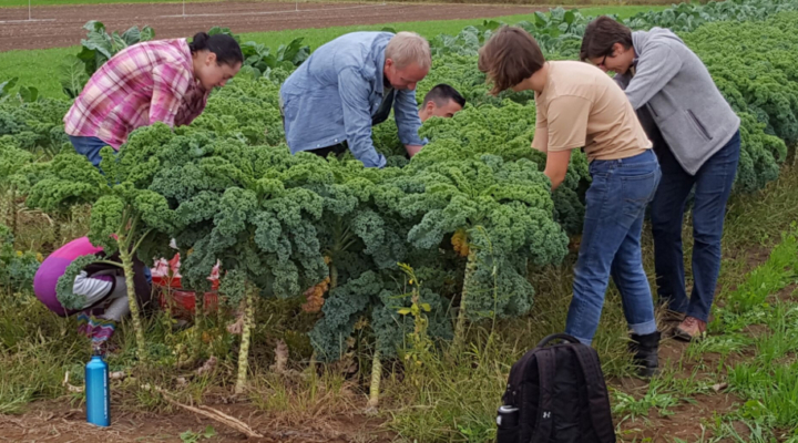 Gleaning event planned for Oct. 7