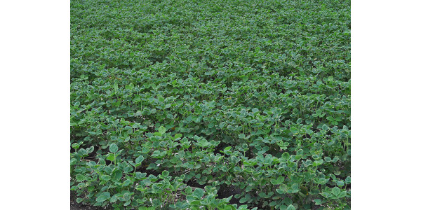 Response of soybean yield to dicamba exposure