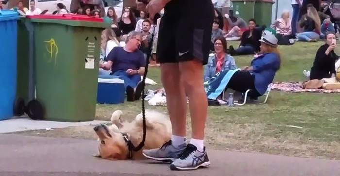 Dog plays dead to avoid leaving the park