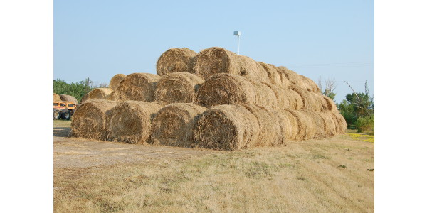 A location near the NDSU campus in Fargo will accept hay donations, which will then be offered to eligible producers in a hay lottery. (NDSU Photo)