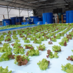 Nelson and Pade, Inc.®, The Most Trusted Name in Aquaponics®, has announced their 2017 Clear Flow Aquaponic Systems® Video and Photo Contest. (Image Courtesy of Nelson and Pade, Inc.®)