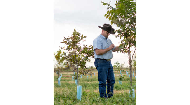 Workshop on pecan orchard management