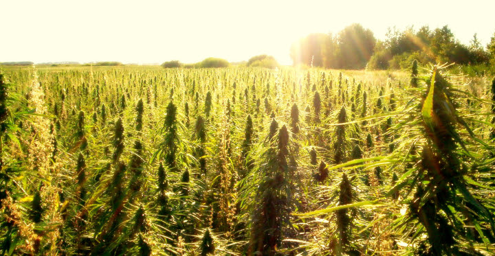 Industrial Hemp Farming Act