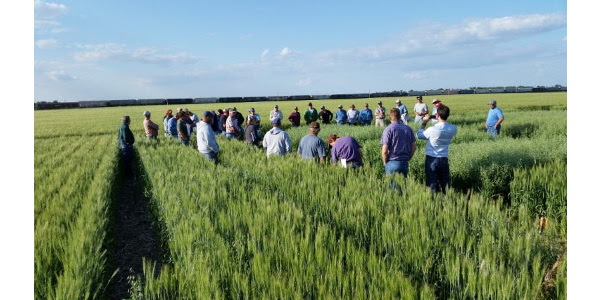 The Jones County Crop Improvement Association and SDSU Extension will host the 29th Annual Winter Wheat meeting at Draper, August 24, 2017. The event will be held in the Draper City Auditorium and will begin at 6 p.m. (CDT). (Courtesy of iGrow.org)