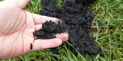 Biochar effective as manure lagoon cover