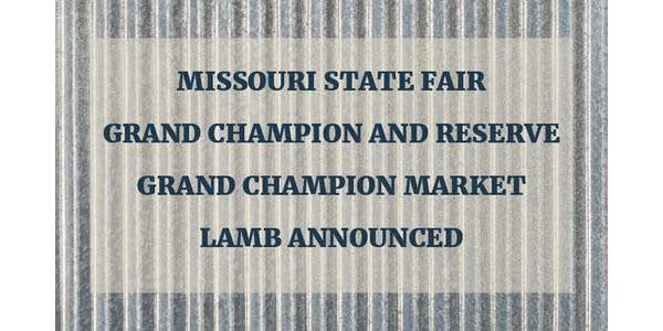 Grand champion market lamb announced