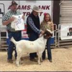 The 2016 champion buck. (Courtesy of Nebraska Extension)