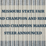 On Aug. 19, both Katelyn and Cole will sell their Market Steers in two of 12 lots offered in the Missouri State Fair Sale of Champions.
