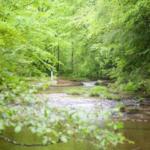 A creek in UK's Robinson Forest. (PHOTO: Matt Barton)