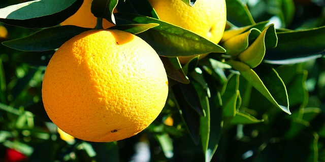 Vacancy on citrus committee