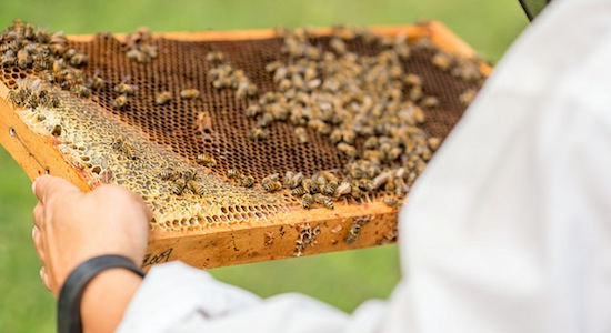 $10 million to aid bee health