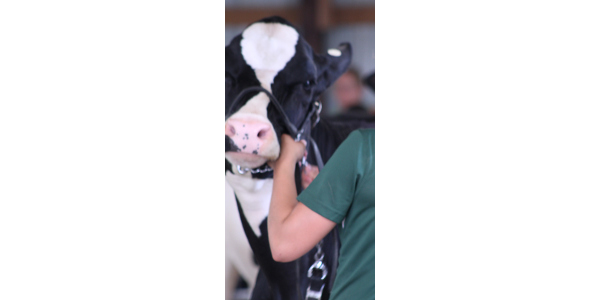 4-H State Dairy Judging contest