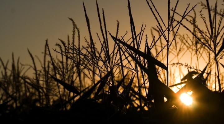Syngenta settles U.S. farmer lawsuits