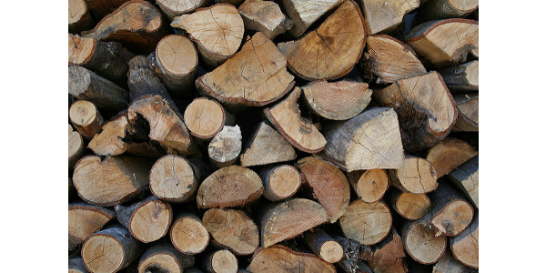 Obtain firewood from in-state sources