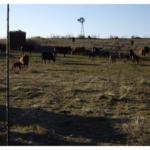 kansas ranch