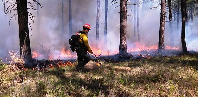 Benefits of decreasing forest density