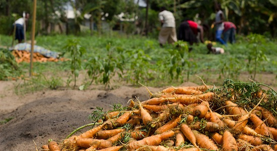 Agricultural solutions to unemployment