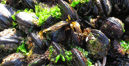 Maine orders partial shellfish shutdown