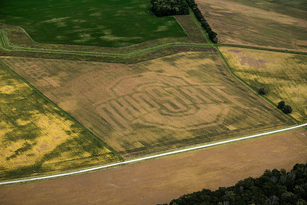 Cornfield grows into shape of Ohio State logo