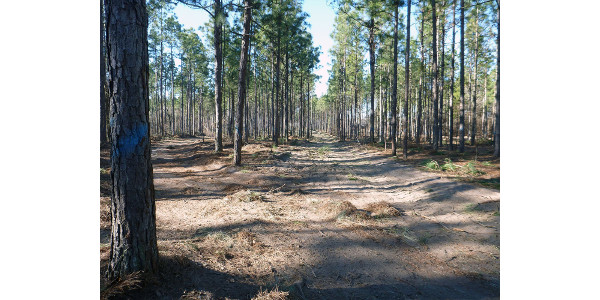 Forests occupy 13.1 million acres or 67 percent of the land area in South Carolina. (Image Credit: Derrick Phinney / Clemson University)