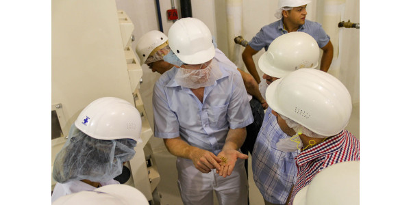 The Buhler–KSU Executive Milling in Spanish course participants examine wheat in a hands-on exercise in the KSU Hal Ross Flour Mill. (Courtesy of KSU-IGP Institute)