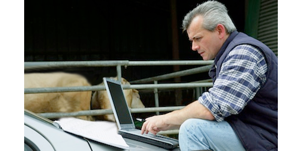 Opportunities for open cows