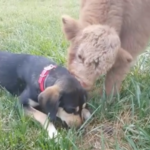 Baby James and his dog friend, May. (Screenshot from video)