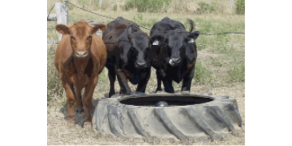 """This clinic will provide a """"hands-on"""" opportunity for livestock producers to learn the basics of installing both permanent high-tensile and temporary electric fence for grazing management, as well as show installation of tire tanks for livestock water sources. (Screenshot from flyer)"""
