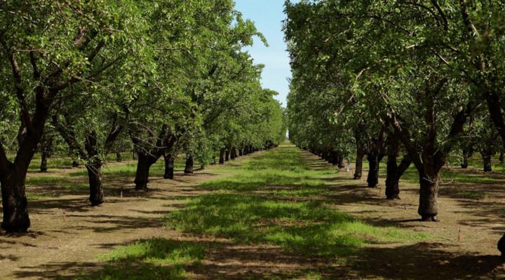 FPI acquires 5,100 acres of Calif. farmland