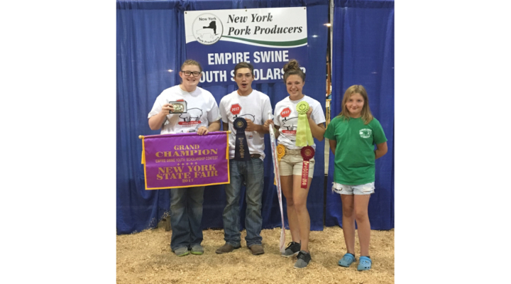 4-H'ers participate in swine shows at NYS Fair