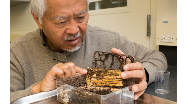 Professor honored for termite research