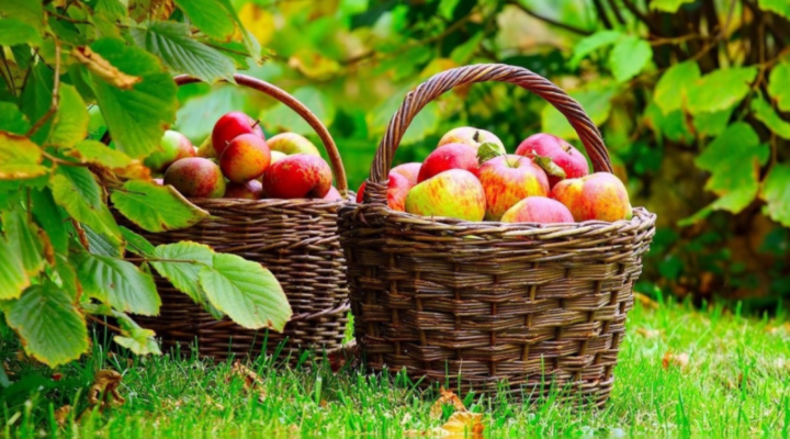 Apples: The 'core' of fall