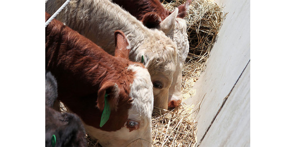 Workshop series on cost-effective cattle feeding