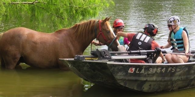 """Equestrians rally to aid """"Harvey"""" horses"""
