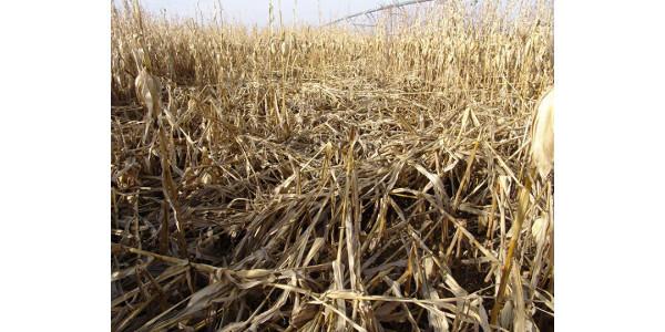 Stalk rot diseases in Nebraska corn fields