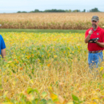 From left, Ryan Frasch, Chad Arnold and Bill Fjelland of the Iowa Crop Improvement Association survey a field of soybeans. (Christopher Gannon/Iowa State University)