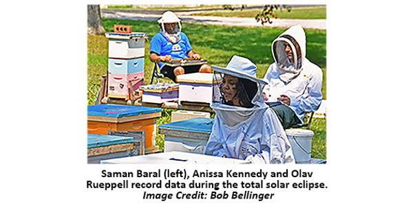 Researchers test honey bee response to eclipse