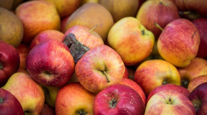 Aroostook Apple Day