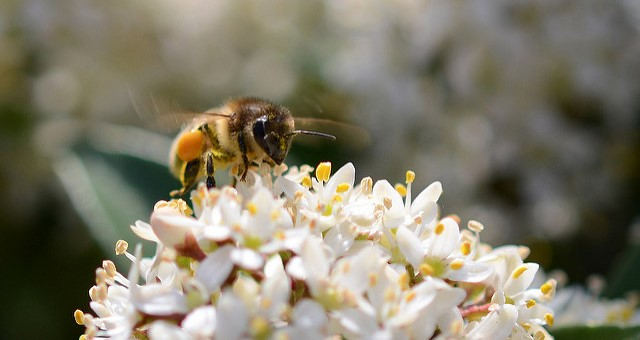 Honey & Pollinator Celebration