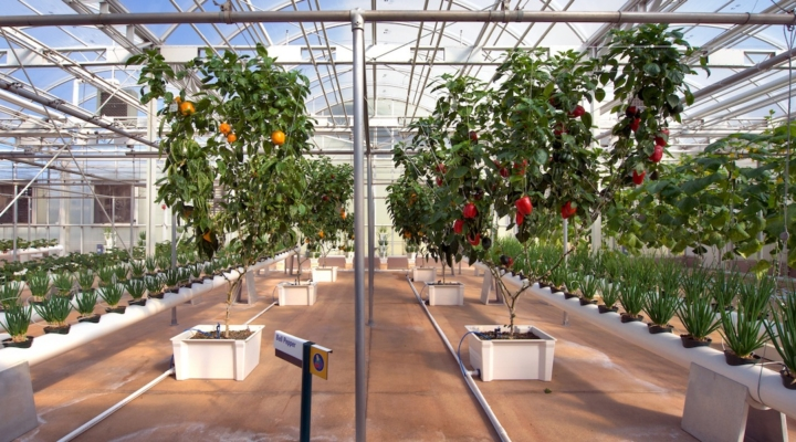 Green industry is growing in Florida